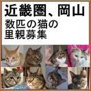 近畿圏、岡山 数匹の猫の里親募集