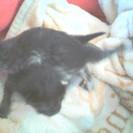 生まれたての子猫を保護。善意に感謝いたします。ありがとうご…