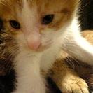 【決定】生後一ヶ月半の子猫です【しました】