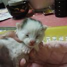 子猫が産まれました
