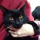 黒猫8ヶ月譲ります。