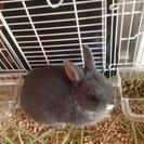 可愛らしい小ウサギちゃんです。
