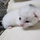 殺処分を免れました 1ヶ月の可愛い子猫達