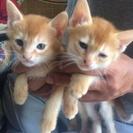 子猫たちの里親を募集しています - 宇土市