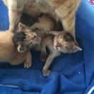 子猫たちの里親を募集しています − 熊本県