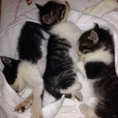 子猫 生後半月程度