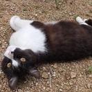 とても人懐こい迷い猫です。里親さん探しています!