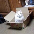 2年以上里親さんを捜している子 猫の里親募集
