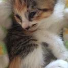 生後一ヶ月子猫