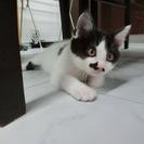 生後2カ月の子猫の里親を募集です