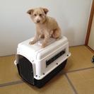 バリケンネル ペットケース サイズML (犬・猫の移動に便利)