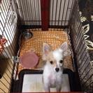 生後6ヶ月のミックス犬、リュウ君