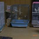 【緊急募集】白文鳥4羽桜1羽 無償です。宮崎か福岡で