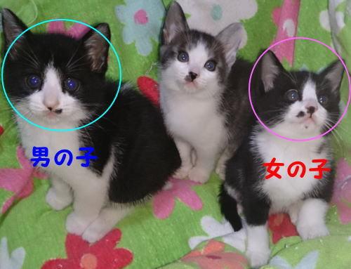かわいいネコちゃんの里親が決りました☆ - 塩竈市