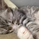 仔猫 3か月半 ♂