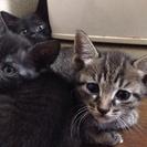 可愛い子猫が4匹産まれました♪