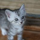 生後2ヶ月の子猫2匹もらってくれる里親を探しています。