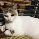 もうすぐ産まれる子猫☆滋賀県