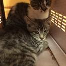 子猫2匹の里親募集です。