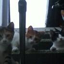兄弟猫3匹♪