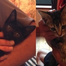 2匹の子猫の里親様を探しています。