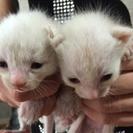生後約一ヶ月の子猫貰って下さい♪