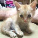 豊後高田市の子猫