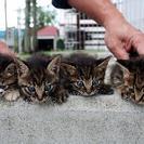 新得より飼い主を捜している猫が4匹おります。
