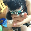 生後一ヶ月半の子猫ちゃん