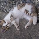生後二か月 子猫里親募集!