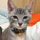 愛知県刈谷市より生後五ヶ月、生後三ヶ月くらいの子猫の里親募集
