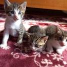 再投稿です!3匹とも男の子の人懐っこい子猫です。