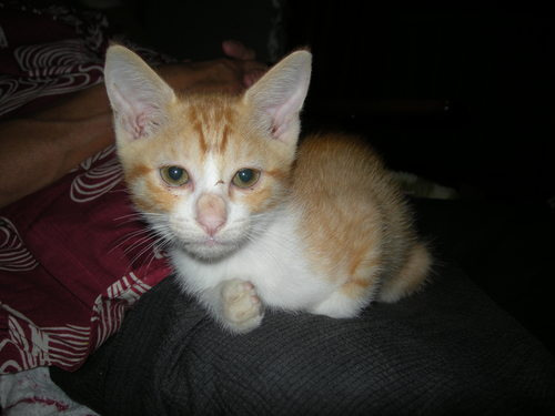 保護 したら 野良猫 野良猫を見つけても飼えない時の対処法と保護後のポイントをご紹介