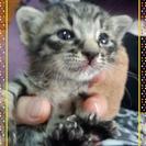 赤ちゃん子猫の里親様募集!