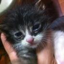 好奇心旺盛なとっても可愛い子猫、里親さん募集!
