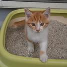 8月17日生まれの雌の子猫です。里親様募集中