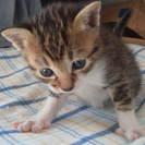9月22日生まれの子猫たち