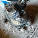 人懐っこい仔猫です