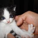 一か月半ぐらいの子猫4匹ひろいまいた。