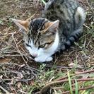 生後1ヶ月子猫の里親探してます!