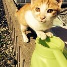 カワイイ迷いネコです。