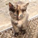 子猫2匹の里親さんを探しています - 荒尾市