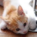 子猫2匹の里親さんを探しています - 猫