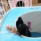 グルグルしっぽの黒猫(4月生まれ・オス)里親募集