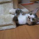 多頭飼育現場から救出された仔猫『きんとき』
