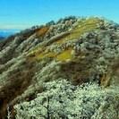 丹沢に桜霧氷を見に行く 夕日とご来光と星空と夜景と富士山の眺めも堪...