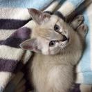 カワイイ⭐️子猫です