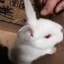 9月半ば生まれの子ウサギ2羽