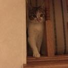 4か月くらい三毛猫