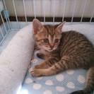 生後一カ月半、ふわふわの子猫三匹です。